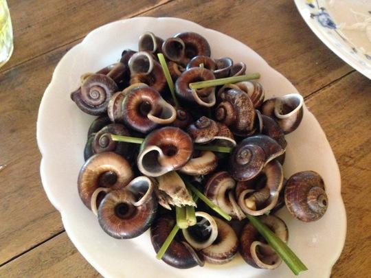 Đi Tây Ninh ăn… thằn lằn núi