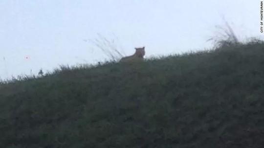 Con vật được camera ghi hình lại. Nguồn: CNN