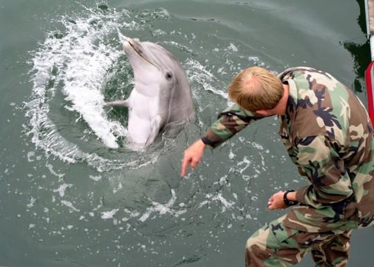 Cá heo quân sự của Mỹ. Ảnh: Hải quân Mỹ
