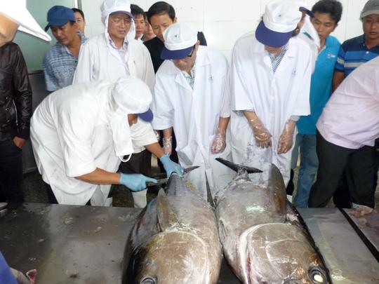Các chuyên gia thẩm định chất lượng cá ngừ đại dương cho lô hàng thứ hai xuất sang Nhật vào sáng 31-1 tại Bình Định.