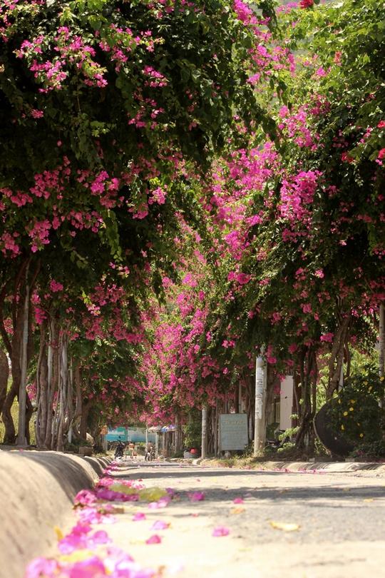 Đường Bạch Thái Bưởi được nhiều người đặt là tuyến đường lãng mạn nhất Nha Trang
