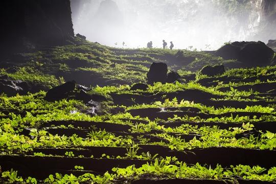 Thảm thực vật kỳ thú bên trong Sơn Đoòng nơi đoàn làm phim sẽ có cảnh quay lên sóng