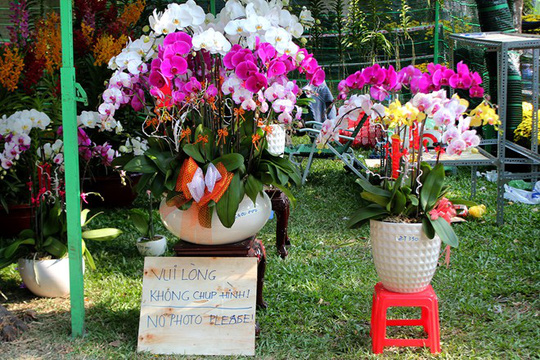 Nhiều gian hàng hoa cấm hẳn khách chụp ảnh.