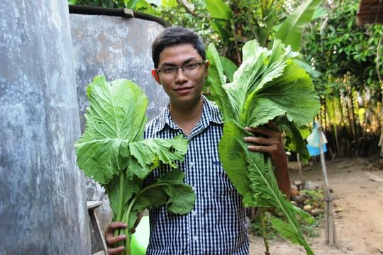 Cây cải xanh có kích thước to hơn cây bình thường đến 4 lần.