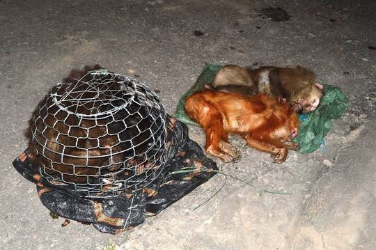 Xe khách giường nằm chở khỉ đã chết