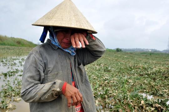 Chị Nguyễn Thị Kim, ngụ xã Bình Chương, huyện Bình Sơn (Quảng Ngãi), bật khóc khi nhìn 9 sào dưa hấu gần đến ngày thu hoạch bị nước lũ nhấn chìm, hư hỏng hoàn toàn. Ảnh: Tử Trực