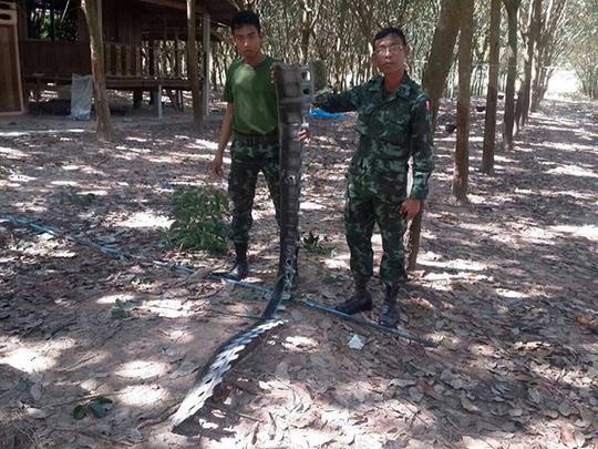 Binh sĩ Thái Lan chuẩn bị các biện pháp bảo vệ biên giới gần ngôi đến tranh chấp Preah Vihear hôm 7-12-2014. Ảnh: Bangkok Post