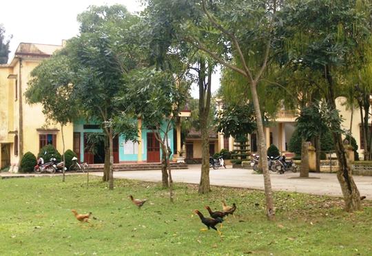 Gà được thả tự do chạy tung tăng trong khuôn viên UBND xã Hà Lĩnh