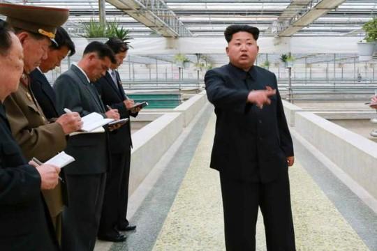 Lãnh đạo Kim Jong Un thăm trang trại rùa ngày 19-5 vừa qua. Ảnh: Yonhap