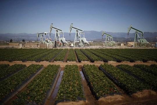 Giá dầu thô Mỹ đang có dấu hiệu tăng nhẹ. Ảnh: Reuters