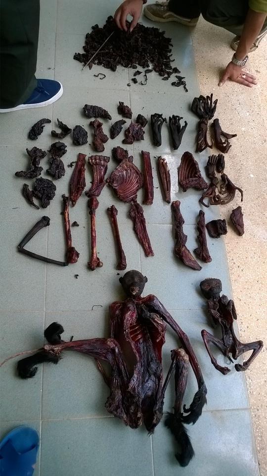 Truy tìm kẻ giết hại 5 con voọc chà vá chân đen
