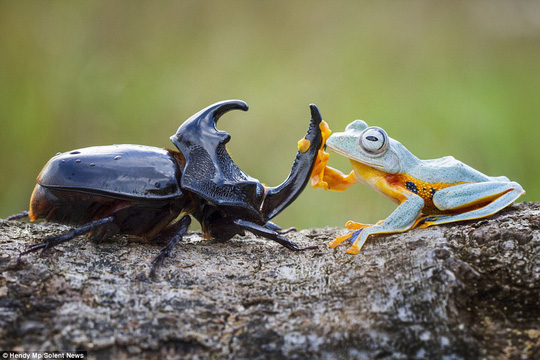 Howdy partner! The 25-year-old described the moment as amazing and added the frog just saw the beetle and decided to crawl on top