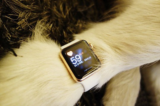 Extravagant: In a follow-up post, Sicong shows the watch being used to test Kekes heart rate
