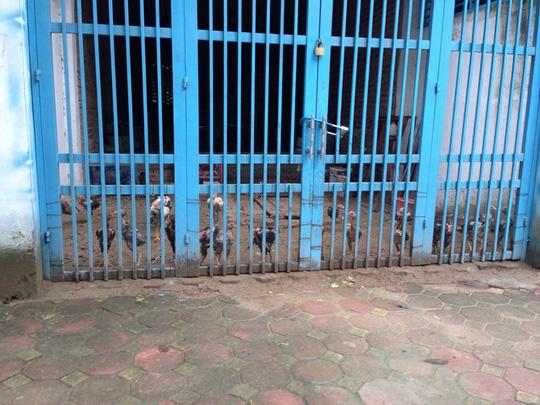 Biệt thự, nhà liền kề bạc tỉ chỉ dùng để nuôi thả gà