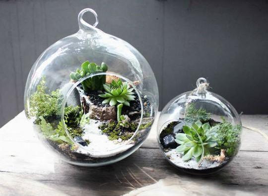 Mỗi sản phẩm là một khu vườn nhỏ trong bình thủy tinh xinh xắn