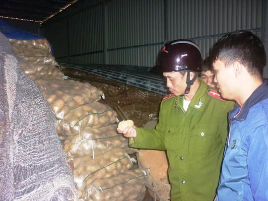 Lực lượng chức năng thu giữ khoai tây Trung Quốc có dư lượng thuốc bảo vệ thực vật vượt ngưỡng cho phép tại chợ nông sản Đà Lạt