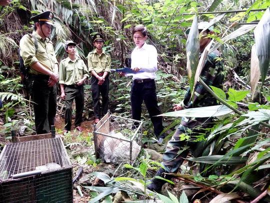 Cơ quan chức năng thả 8 con vật quý hiếm về rừng tự nhiên  Ảnh: TTXVN