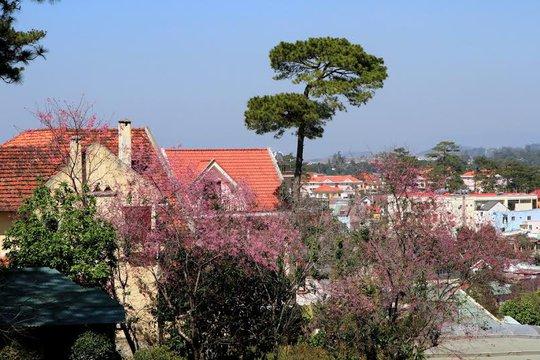 Làm cho góc phố và những ngôi biệt thự trên đường Hùng Vương Đà Lạt trở ne6n có hồn