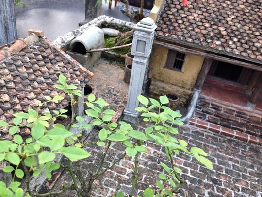 """Thu nhỏ """"ngôi nhà quê"""" Bắc Bộ trong chậu bonsai gây sốt"""