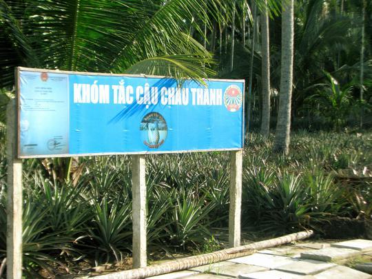 Khóm Tắc Cậu là đặc sản của huyện Châu Thành, tỉnh Kiên Giang