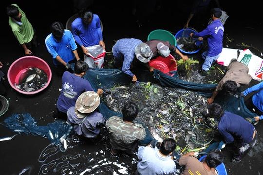 """Bangkok: Siêu thị bỏ hoang thành """"ao"""" nuôi 3.000 con cá"""