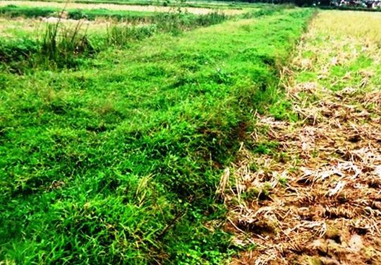 Bờ đất đang còn ở cánh đồng của hai làng mà các cụ cao niên kể được làng Quang Ốc đào trong 1 đêm để phân chia đất đai