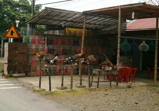 Chim hoang dã được bày bán công khai gần UBND xã Hà Lĩnh