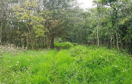 Con đường dẫn vào bãi tập kết gỗ