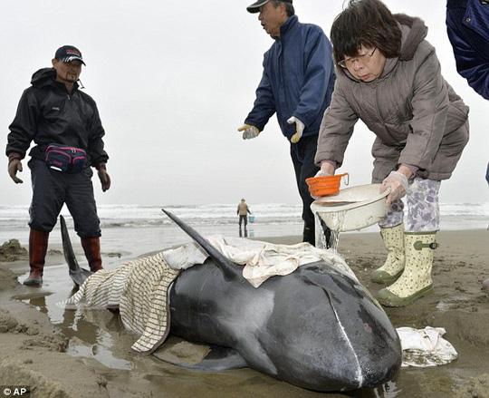 Hàng chục người mang theo xô để múc nước đổ lên người những chú cá heo. Ảnh: AP