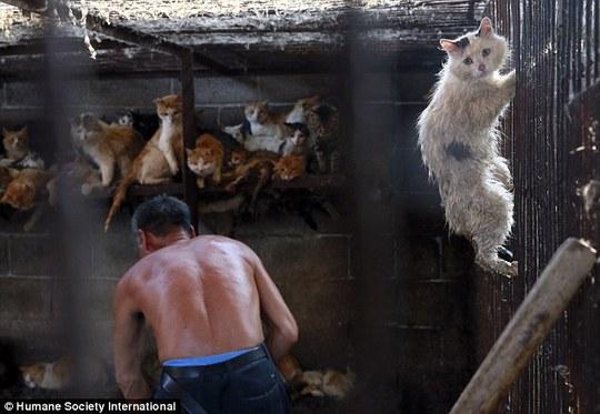 Khoảng 10.000 con chó và mèo chờ bị giết thịt tại các lò mổ ở Ngọc Lâm. Ảnh: HSI