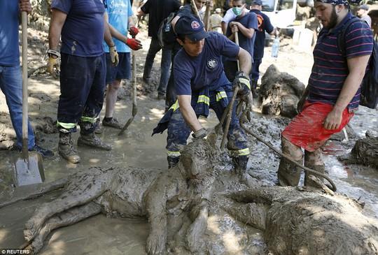 Xác gấu, hổ, chó sói... nằm la liệt trên đường phố. Ảnh: Reuters, AP