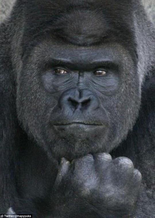 Con vật ngồi chống cằm vẻ suy tư. Ảnh: Twitter