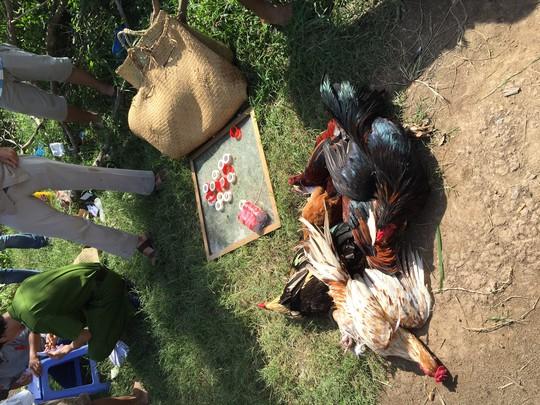 Các con gà tại hiện trường