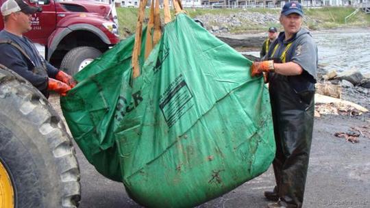 Quả tim cá voi xanh chuẩn bị được mang đi bảo quản. Ảnh: BBC