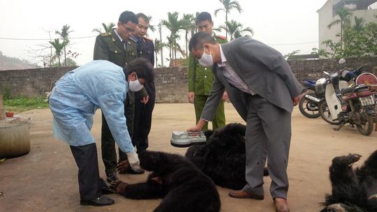 Cơ quan chức năng tỉnh Quảng Ninh kiểm tra gấu chết tại một cơ sở nuôi  Ảnh: Trọng Đức