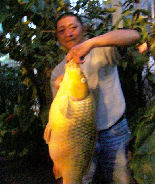 Con cá chép vàng dài gần 1m, nặng hơn 10kg do anh Nguyễn Thúc Hưng câu được