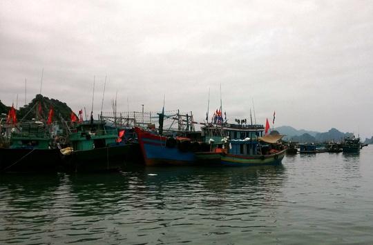 tàu thuyền neo đậu tại Vân Đồn (Quảng Ninh)