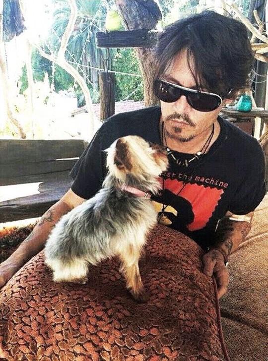 Đây là chó cặp của Johnny và Amber