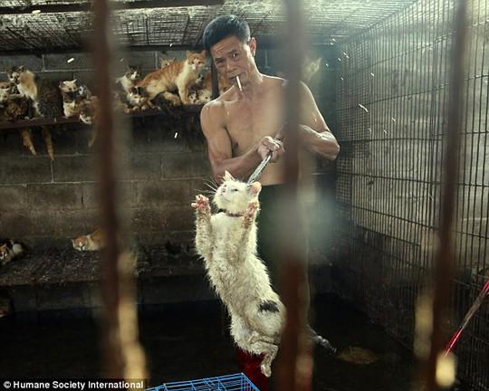 Người đàn ông này đồng ý bán con mèo cho ông Peter Li. Ảnh: HSI