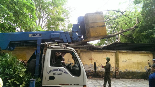 Công nhân công ty Cây xanh Hà Nội được điều đến xử lý vụ việc