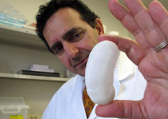 Các nhà khoa học đã nuôi cấy thành công dương vật nhân tạo trong phòng thí nghiệm