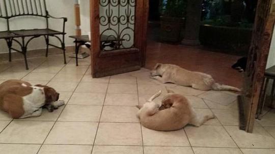 Bầy chó hoang đến tiễn đưa bà Suarez. Ảnh: Facebook