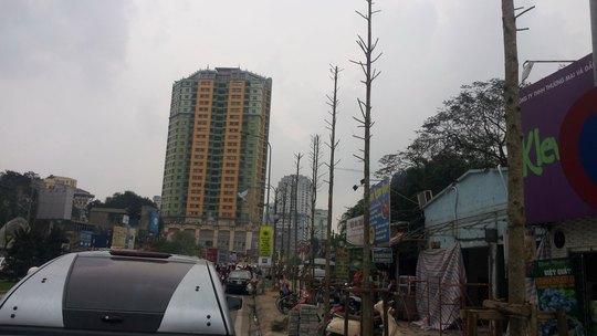 Các chuyên gia nhận định cây đang được trồng ở đường Nguyễn Chí Thanh (Hà Nội) như trong ảnh là không phù hợp