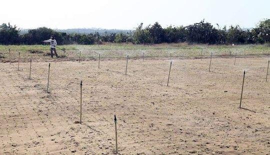 Cây trồng ở tỉnh Ninh Thuận đang thiếu nước nghiêm trọng