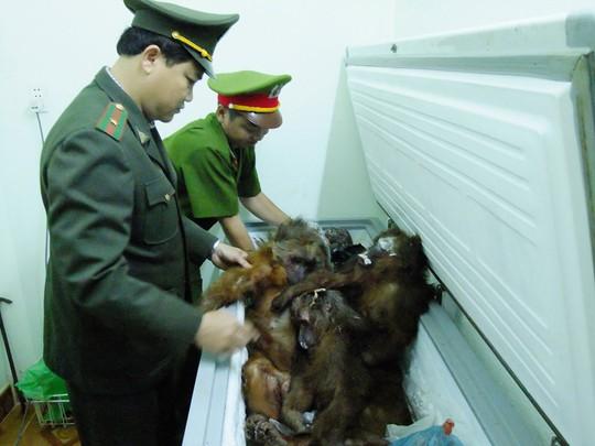 Tang vật trong một vụ buôn bán động vật hoang dã trái phép được cơ quan chức năng của TP Đà Nẵng phát hiện  Ảnh: QUANG VINH