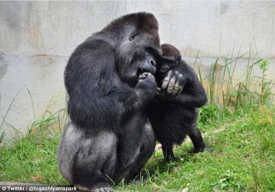 Shabani chơi với khỉ con. Ảnh: Twitter