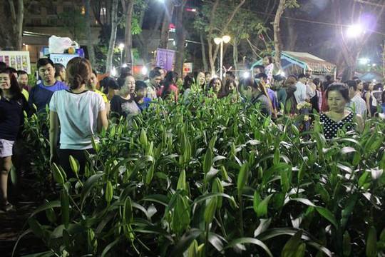 Hoa Ly 3 cây/ chậu được giảm giá từ 250.000 đồng xuống còn 100.000 đồng/ chậu thu hút nhiều người mua.