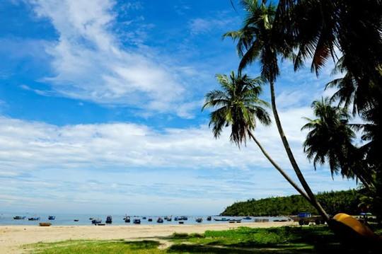 Những hàng dừa đã tạo nên nét duyên dịu dàng của Tam Hải