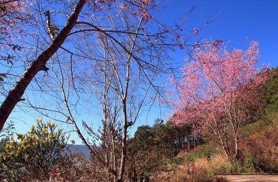 Màu phớt hồng pha chút sắc tím, quyện trong cái se lạnh của phố núi khiến lòng người càng đắm say