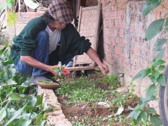 Vườn rau nhỏ của họa sĩ Nguyễn Thượng Hỷ